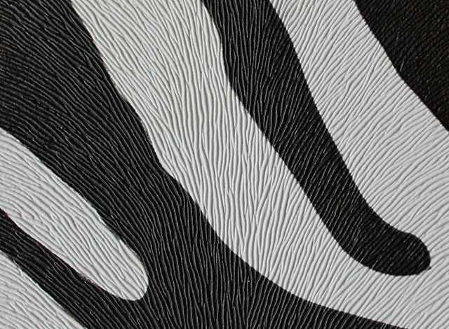 Zebra blanco negro