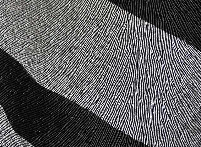 Zebra gris negro